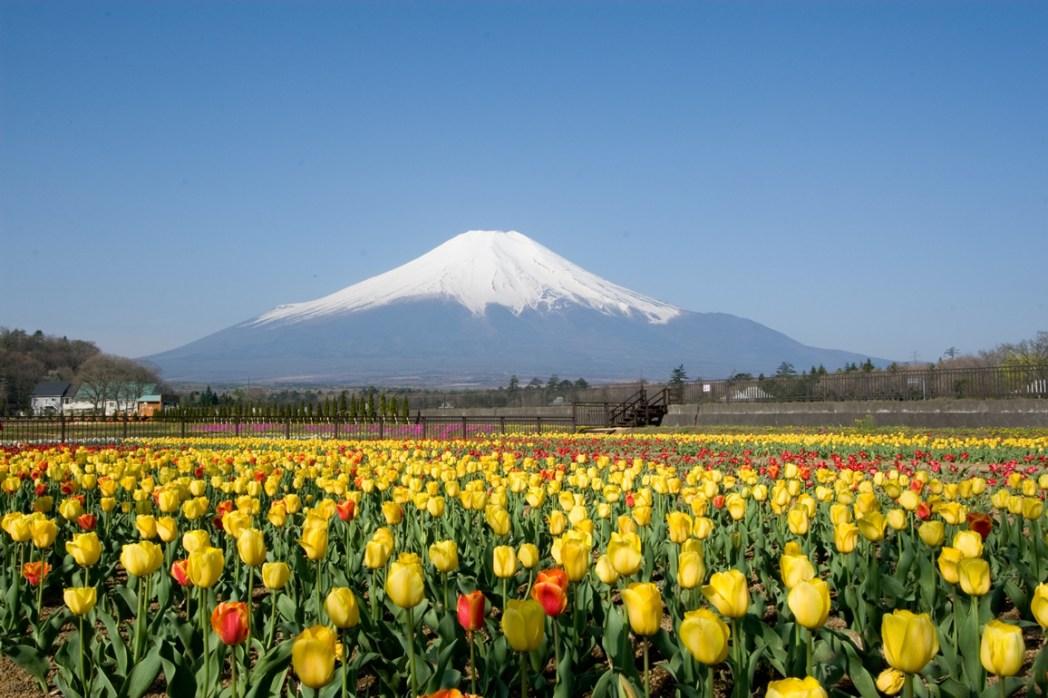 สวนยามานาคะโกะ ฮานะโนะมิยาโกะ